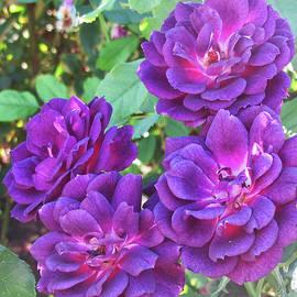 Ruth Jolly - Purple Roses