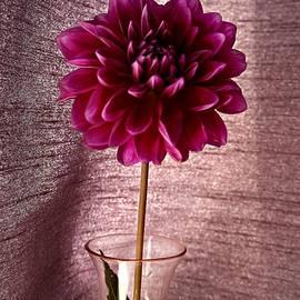 CJ Anderson - Purple Splendor