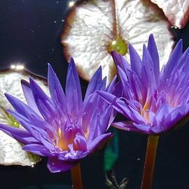 Charlotte Gray - Purple Twins