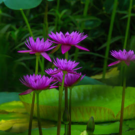 Purple Water Lilies - Garry Gay