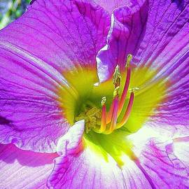 Bonita Brandt - Purple/yellow macro
