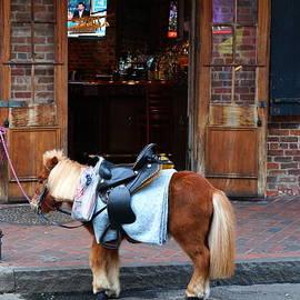 Chuck Johnson - French Quarter Horse