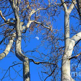 Karen Adams - Quarter Moon One Sunday Afternoon