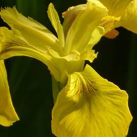 Connie Handscomb - Queen Fleur de Lys