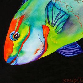 Brenda Tucker - Queen Parrotfish on Black