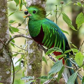 Mauro Roman - Quetzal