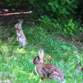 Brian Manfra - Bunny Love