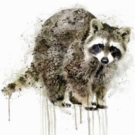 Marian Voicu - Raccoon