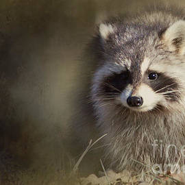 Pam  Holdsworth - Raccoon