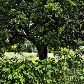 Gary Richards - Ragweeds Beneath the Tree