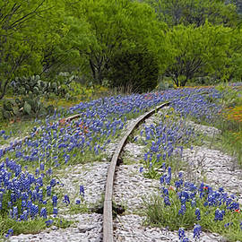 Stephen Stookey - Railway Wildflowers
