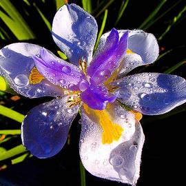 Jerome Stumphauzer - Rain Flower 2