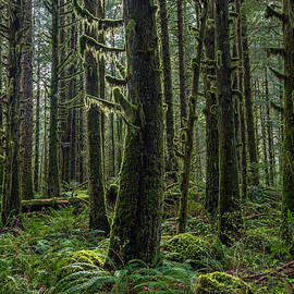 Pierre Leclerc Photography - Rain Forest of Golden Ears