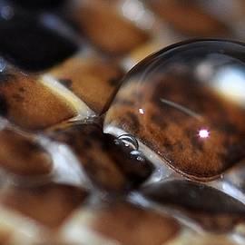 DeTerra Photography - Rain on a snake