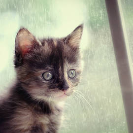 Amy Tyler - Rain Rain Go Away