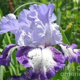 Marsha Heiken - Rain Sun Iris