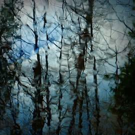 Patricia Strand - Rain Trees