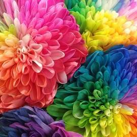 Karen Moren - Rainbow Dahlias