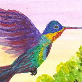 Vicki Maheu - Rainbow Hummingbird
