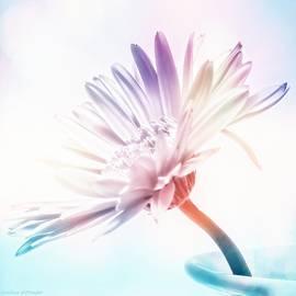 Melissa Bittinger - Rainbow Petals