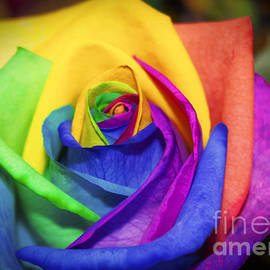 Janice Rae Pariza - Rainbow Rose in Paint