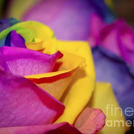 Janice Rae Pariza - Rainbow Roses