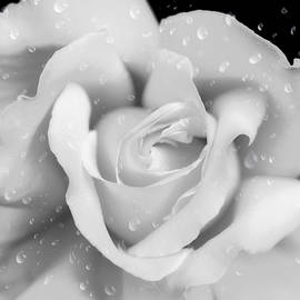 Jennie Marie Schell - Raindrops on Rose Black and White