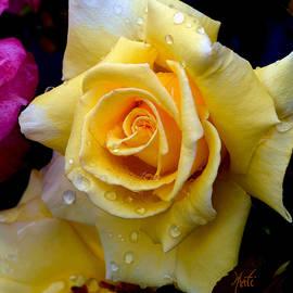 Michele  Avanti - Raindrop Yellow Rose