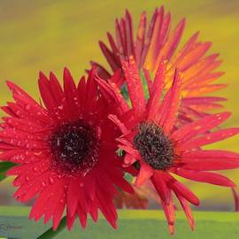 Sonali Gangane - Raindrops on Gerbera