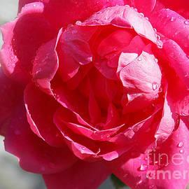 Anita Faye - Raindrops On Roses