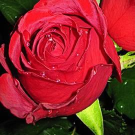Bonita Brandt - Raindrops on Roses