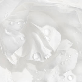 Jennie Marie Schell - Raindrops on White Rose Petals