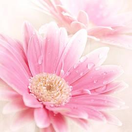 Sharon Mau - Raining Petals