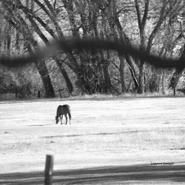 Lenore Senior - Ranch Horse in the Fields