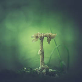 ravaged shroom in the land of small - Shane Holsclaw