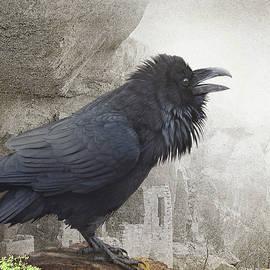 R christopher Vest - Raven At Mesa Verde Ruins