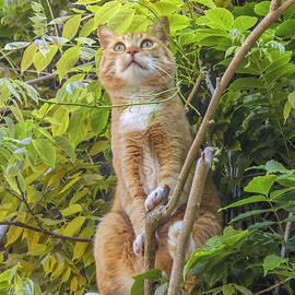 Patricia Hofmeester - Red alert cat in tree