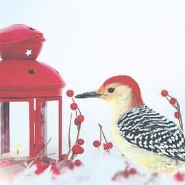 Janette Boyd - Red Bellied Woodpecker in Winter