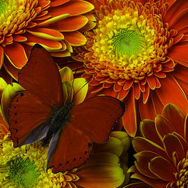 Red Butterfly On Bright Mums - Garry Gay
