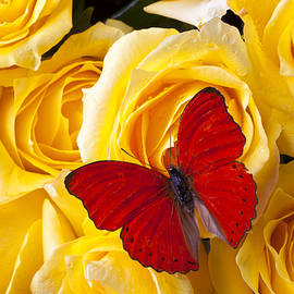 Garry Gay - Red Butterfly on Yellow Roses