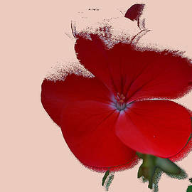 Lana Art - Red Daisy