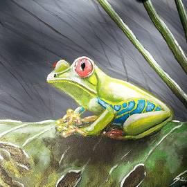 Judit Szalanczi - Red-eyed frog