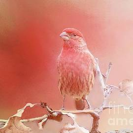Janette Boyd - Red Finch in Morning