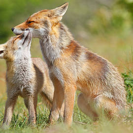 Red Fox Love - Roeselien Raimond