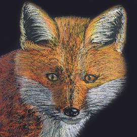 Jayne Wilson - Red Fox Portrait