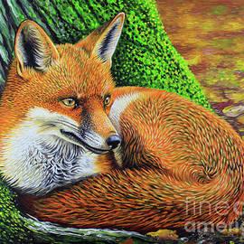 Simon Knott - Red Fox - Wildlife Animals