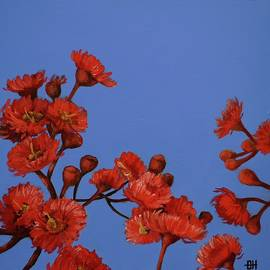 Chris Hobel - Red Gum Blossoms