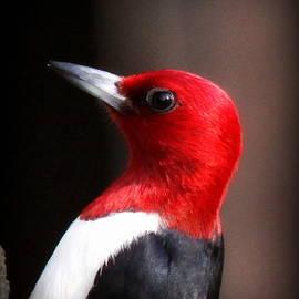 Travis Truelove - Red-headed Woodpecker - 7105-003