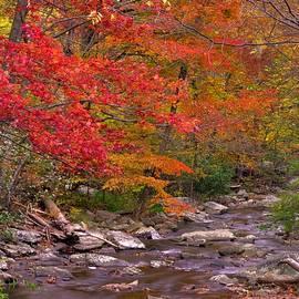 Michael Mazaika - Red Light - Yellow Light - Green Light - Catoctin Mountain Park Big Hunting Creek - Maryland
