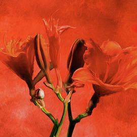 EricaMaxine  Price - Red Lilies